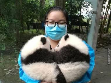 Serduszko z misiów panda