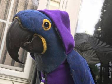 Papuga gotowa na zimne dni