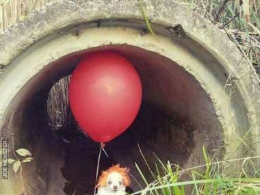 Podejrzana psina