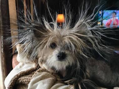 Pies Einsteina