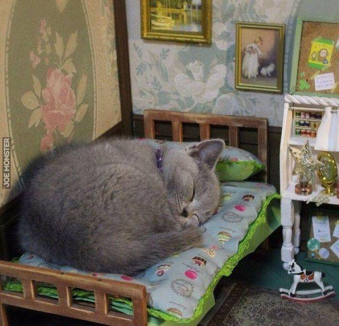 Pan Kotek Był Chory I Leżał W łóżeczku Joe Monster