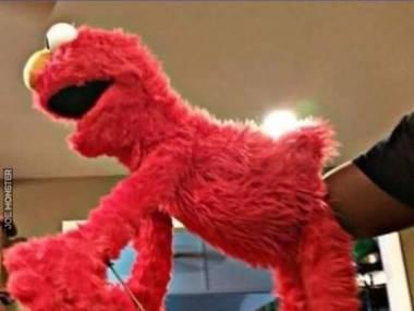 Czego Elmo nie wiedział o samym sobie