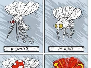 Różne gatunki owadów