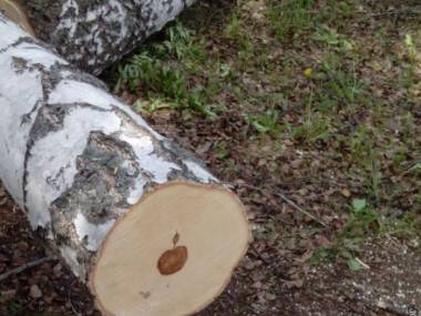 Drewno dla bogaczy