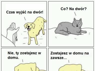 Prawda o kotach