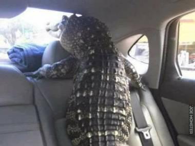 Zostawili go w samochodzie na słońcu, ale nikt nie odważył się wybić szyby