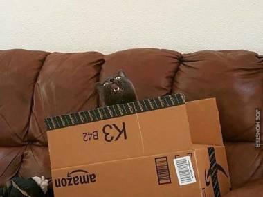 Dzień kiedy przyjdzie paczka jest najlepszym dniem jeśli jesteś kotem