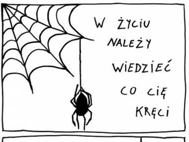 Co kręci niedobrego pająka?
