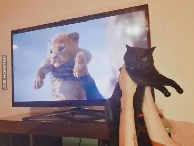 Też mam swojego króla lwa