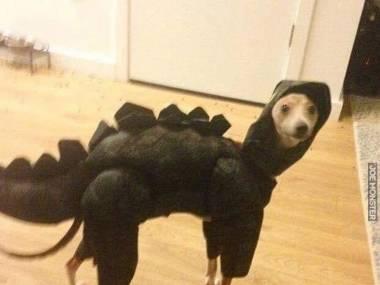 Co to za dinozaur