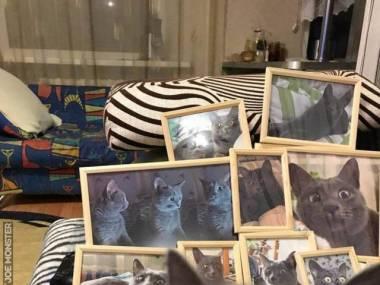 Fotogeniczny kociak