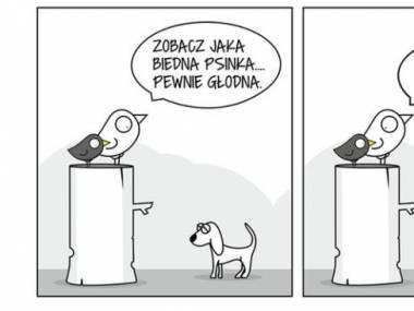 Głodna psinka