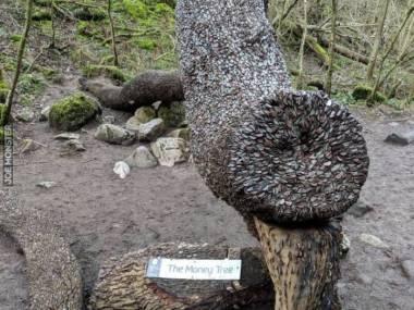 Pieniężne drzewo