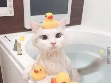 Zgubiłem trzecią kaczuszkę. Nie widziałeś jej?