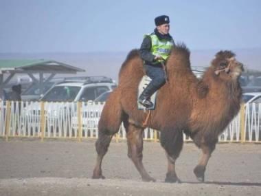 Policjant z pustyni Gobi, Południowa Mongolia