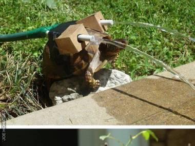 Żółw zraszacz
