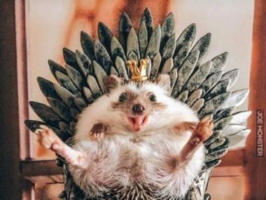 Król na swym tronie