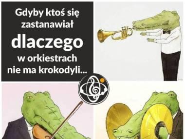 Krokodyle i orkiestra nie idą ze sobą w parze