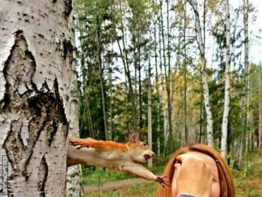Zdesperowana wiewiórka