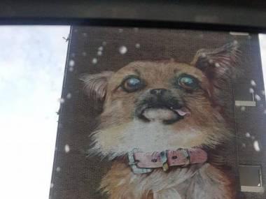 Grzeczny piesek trafił na mural