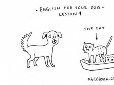 Angielski dla twojego psa