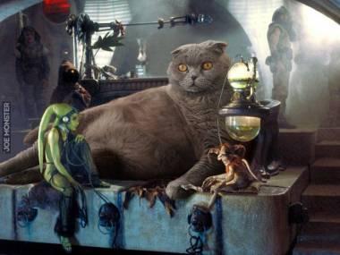 Jabba the Cat