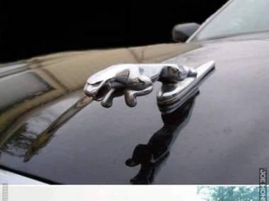 Prawie jak jaguar