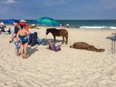 Konie z Morskiego Oka wybrały się na zasłużone wakacje