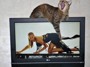 Podekscytowany kot