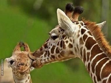Daj mamie buziaka