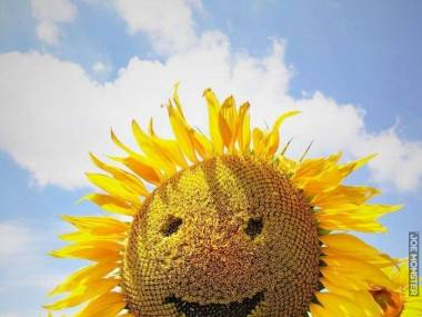 Trochę słońca i uśmiechu