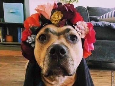 Cosplay Fridy Kahlo