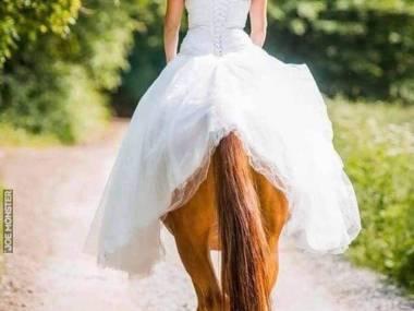 Fotka z wesela centaurów