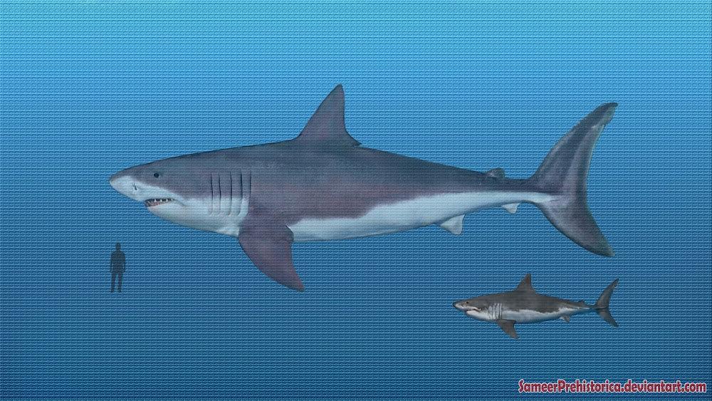 megalodon shark size - 1000×563